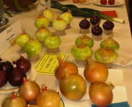 horticultural-show-05